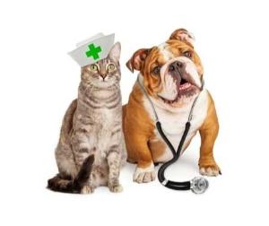 Can Dogs And Cats Get Coronavirus Petmate Pet Education