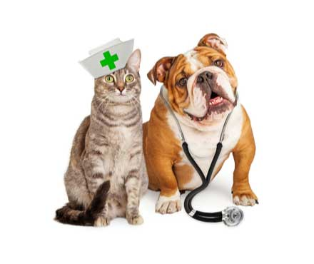 Can Dogs and Cats Get Coronavirus? - Petmate Pet Education