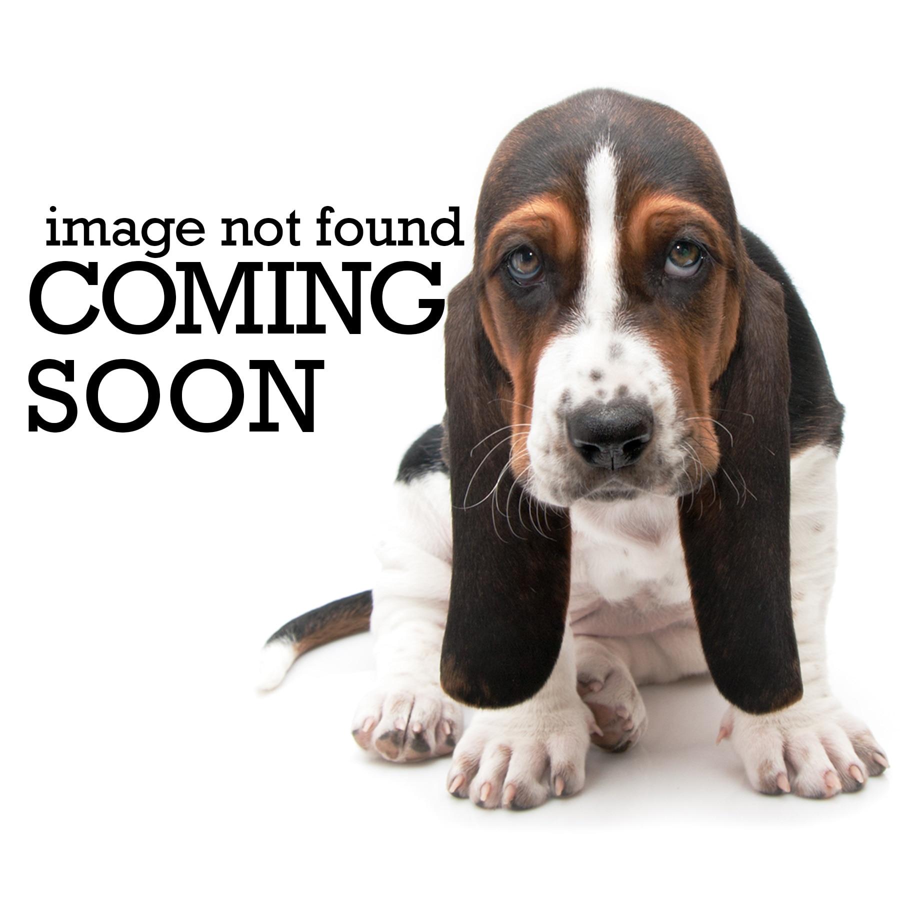 Petmate Brand Official Website